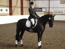 Experienced 16. 1hh All Rounder