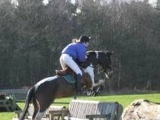 Show Jumpers horse - 14 yrs 4 mths 15.0 hh Skewbald - Gloucesters...