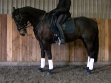 All Rounder horse - 5 yrs 16.2 hh Brown - West Sussex