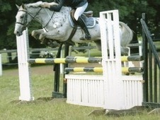 14. 2hh competition pony
