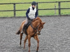 All Rounder horse - 7 yrs 15.3 hh Chestnut - Surrey