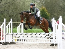 All Rounder horse - 9 yrs 16.2 hh Bay - East Sussex