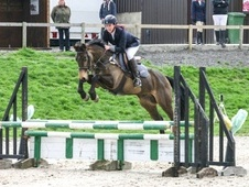 All Rounder horse - 6 yrs 15.2 hh Dun - East Sussex