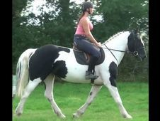 All Rounder Horse - 0. 0 Hh - Dorset