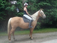 Stunning Welsh Part-bred Mare With Extravagant Action And Great P...