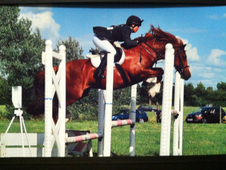 Outstanding jumping pony for sale