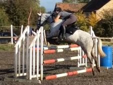 Future Bs/fei Event Pony 14. 2hh 4 Year Old Connemara Gelding By ...