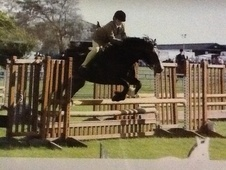 All Rounder horse - 5 yrs 14.2 hh Bay - Nottinghamshire