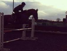 Showjumper For Sale 5* Home Wanted!