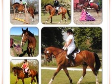 Super All Rounder 16. 1 Gelding 10yr Old