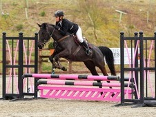 Beautiful 15. 1 4 year old Mare for sale