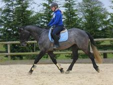 All Rounder horse - 5 yrs 16.1 hh Coloured - Sussex
