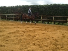 All Rounder horse - 9 yrs 17.0 hh Bay - Surrey