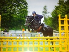 Allrounder/whp/showjumper/pc Showjumper Pony For Sale