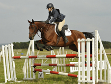Attractive & Competitive 15. 3hh Belgian Warmblood x tb mare, 7 yo