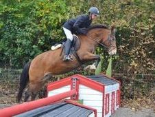 All Rounder horse - 5 yrs 13. 2 hh - Laois