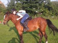 ~~Child's 13hh welsh bay mare~~~