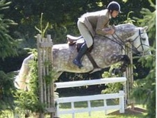 Cob Hunter Showjumper