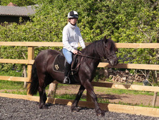 Dale/Welsh Section C Family Pony