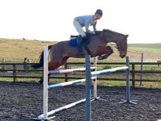 Bold Scopey Young Showjumper / Eventer I.S.H.