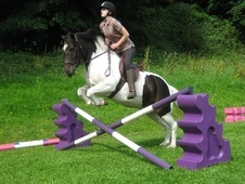 All Rounder horse - 10 yrs 13.0 hh Skewbald - Derbyshire