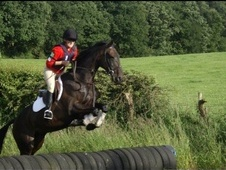 All Rounder horse - 13 yrs 16.2 hh Bay - Cheshire