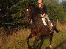 16hh Thoroughbred Mare`