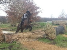 All Rounder horse - 8 yrs 10 mths 15.1 hh Bay - Suffolk