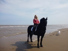All Rounder horse - 10 yrs 15.2 hh Black - Lincolnshire