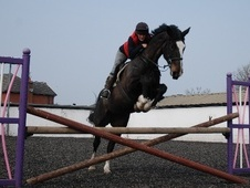 All Rounder horse - 7 yrs 17.0 hh Bay - Merseyside