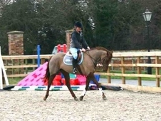 **super All Rounder - 6yr Old 15. 3hh Scottish Sports Horse Mare**