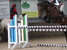 All Rounder horse - 15 yrs 7 mths 14.2 hh Bay - Leicestershire