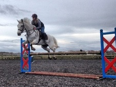 Beautiful 15hh Grey Gelding For FULL LOAN - Merseyside
