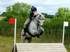 Excellent competition pony for sale