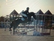 Eventers horse - 5 yrs 3 mths 14.2 hh Bay - Bedfordshire