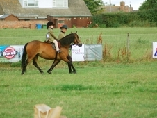 11. 2 Full Dartmoor Mare (Chagford) - Lead Rein/First Ridden