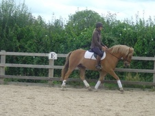 All Rounder horse - 8 yrs 11 mths 14.1 hh Chestnut - Somerset