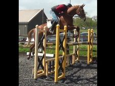 All Rounder horse - 9 yrs 0.0 hh  - Hampshire