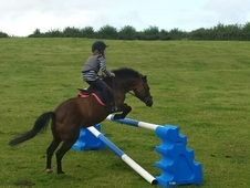 Fabulous, Confidence Giving, 11. 2 Bay Mare For Sale