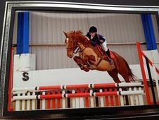 Chestnut, showjumper, XC
