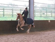 14'2 8 years Teenagers/mothers Dream Pony Stunning Chestnut drivi...