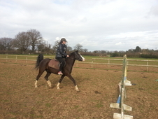 Sox 13. 2hh sec B Welsh Mountain