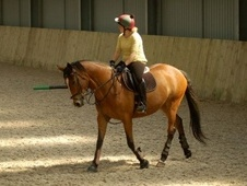 All Rounder horse - 10 yrs 4 mths 16.2 hh Bay - Gloucestershire