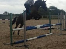Talented Competition Mare