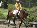 Horse Retraining - Somerset
