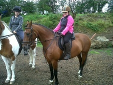 All Rounder horse - 10 yrs 11 mths 14.1 hh Bay - Dyfed