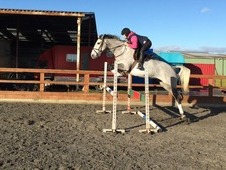 Potential top level showjumper / eventer