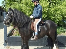 One in a million disability/family pony