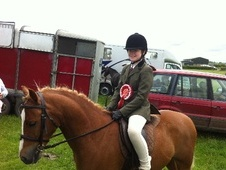 All Rounder horse - 7 yrs 1 mth 13.0 hh Chestnut - Cumbria