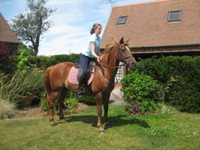 All Rounder Horse - 14. 2h Chestnut - Worcestershire